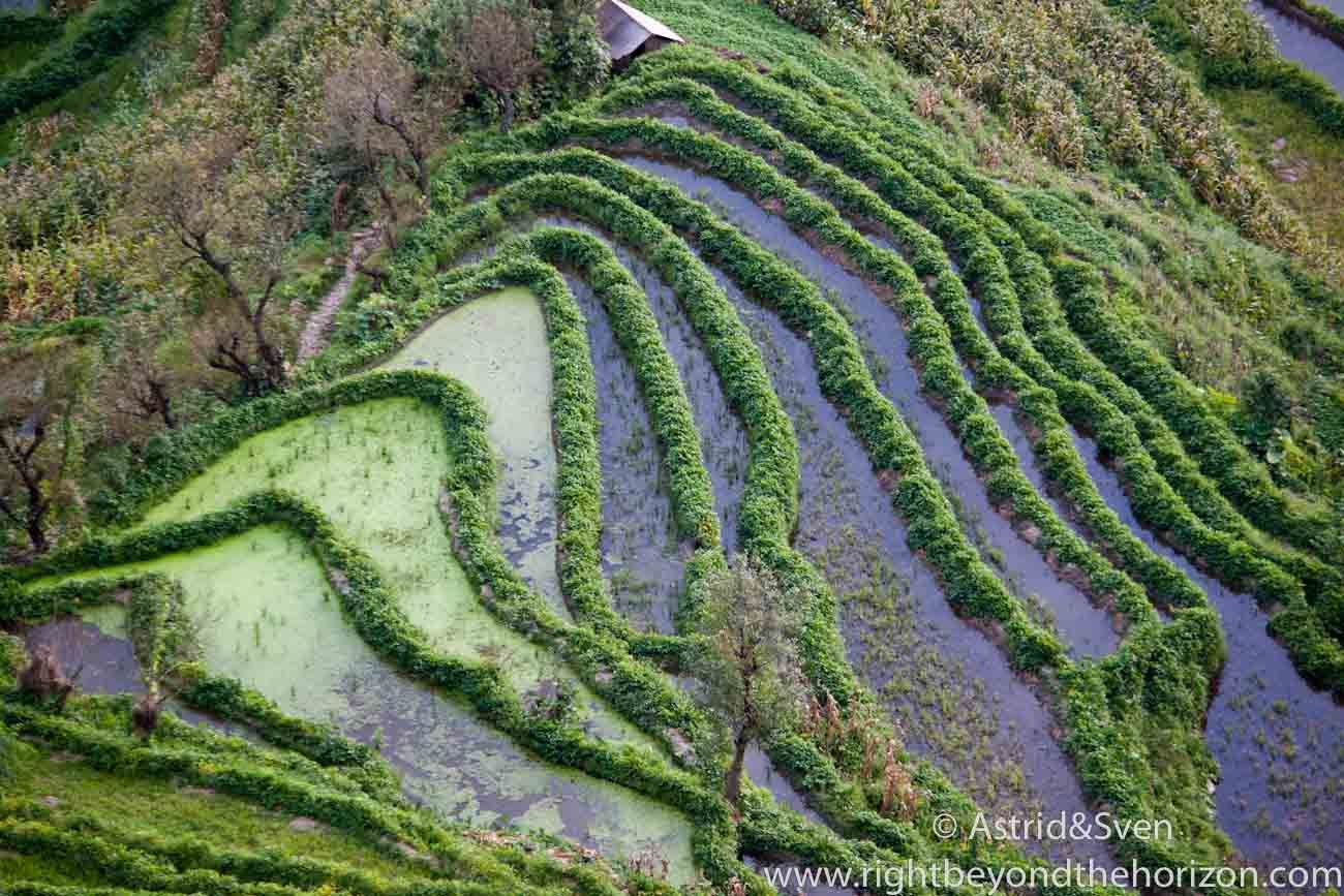 Rice terraces of Yuanyang #riceterrace #yuanyang #travel