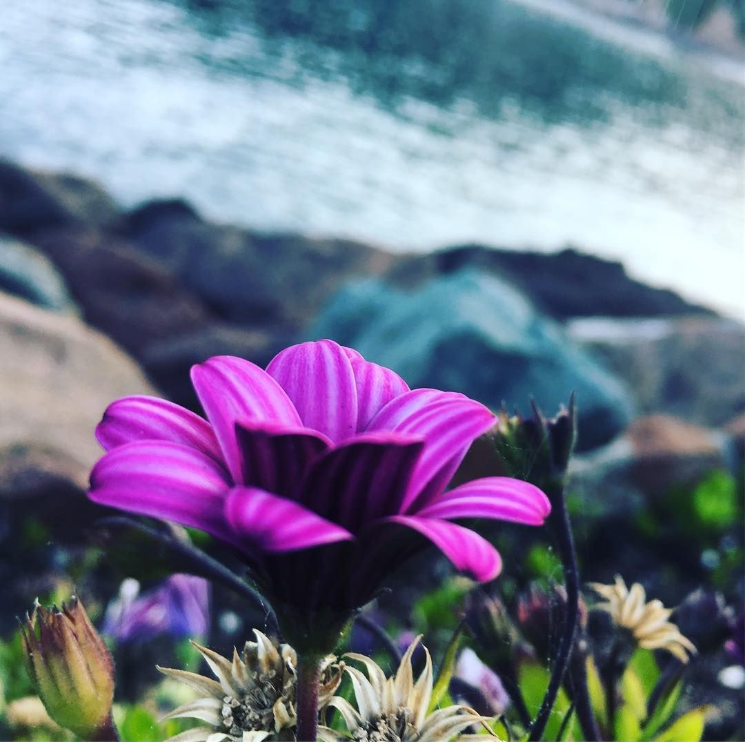 #flowersoffrance #impressions #cotedazur #livinginparadise #begrateful #lebeseelischeidentität