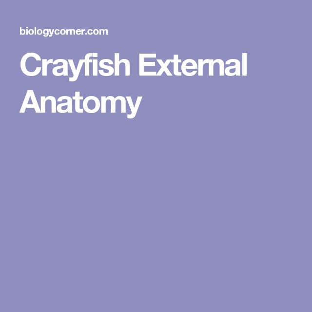 Crayfish External Anatomy Life Science Pinterest Worksheets