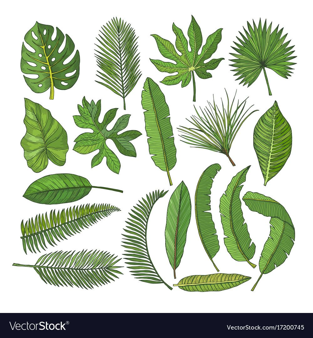 Related Image Tropical Leaves Illustration Leaf Illustration