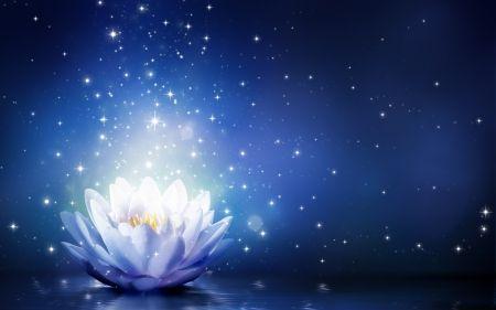 Magical Lotus Flower Lotus Luminos Fantasy Blue White