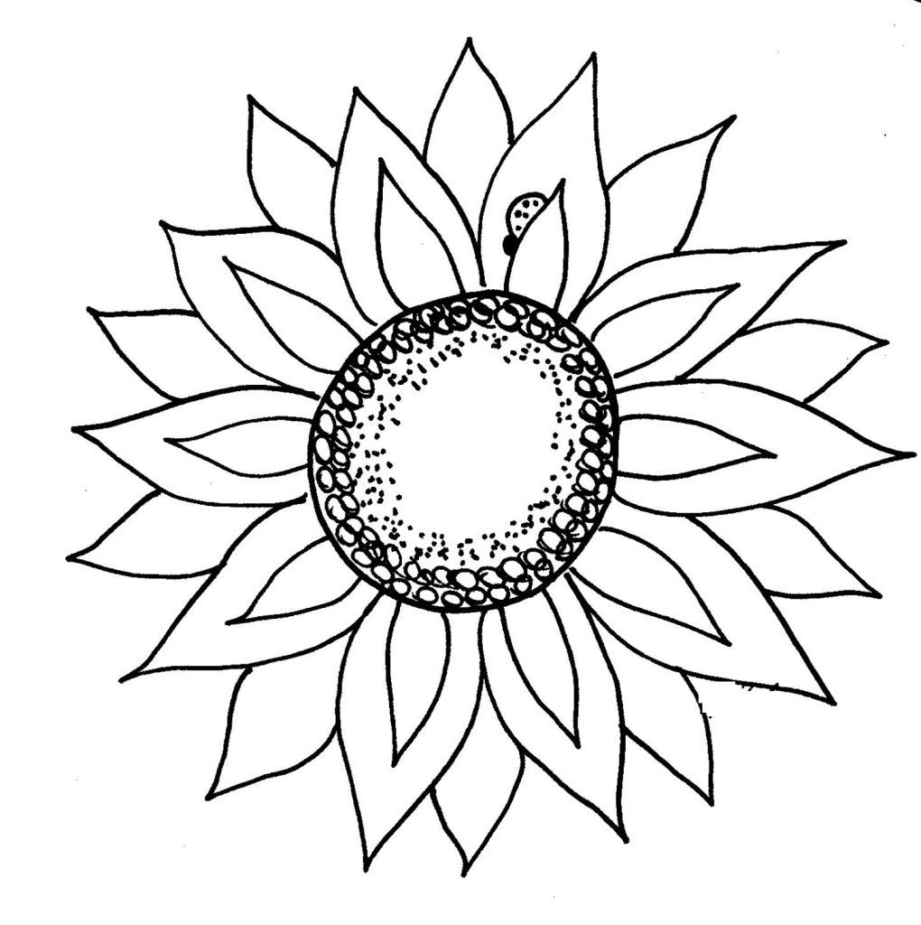 sunflower clipart black and white