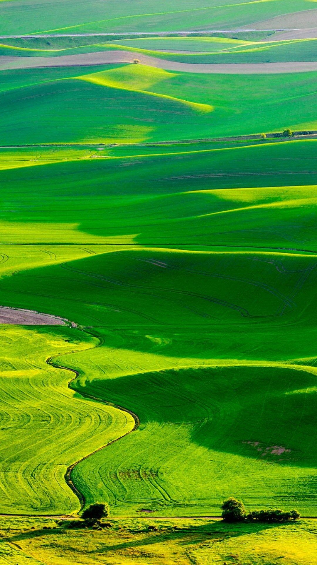 Nature Fresh Grassland Landscape iPhone 8 Wallpapers