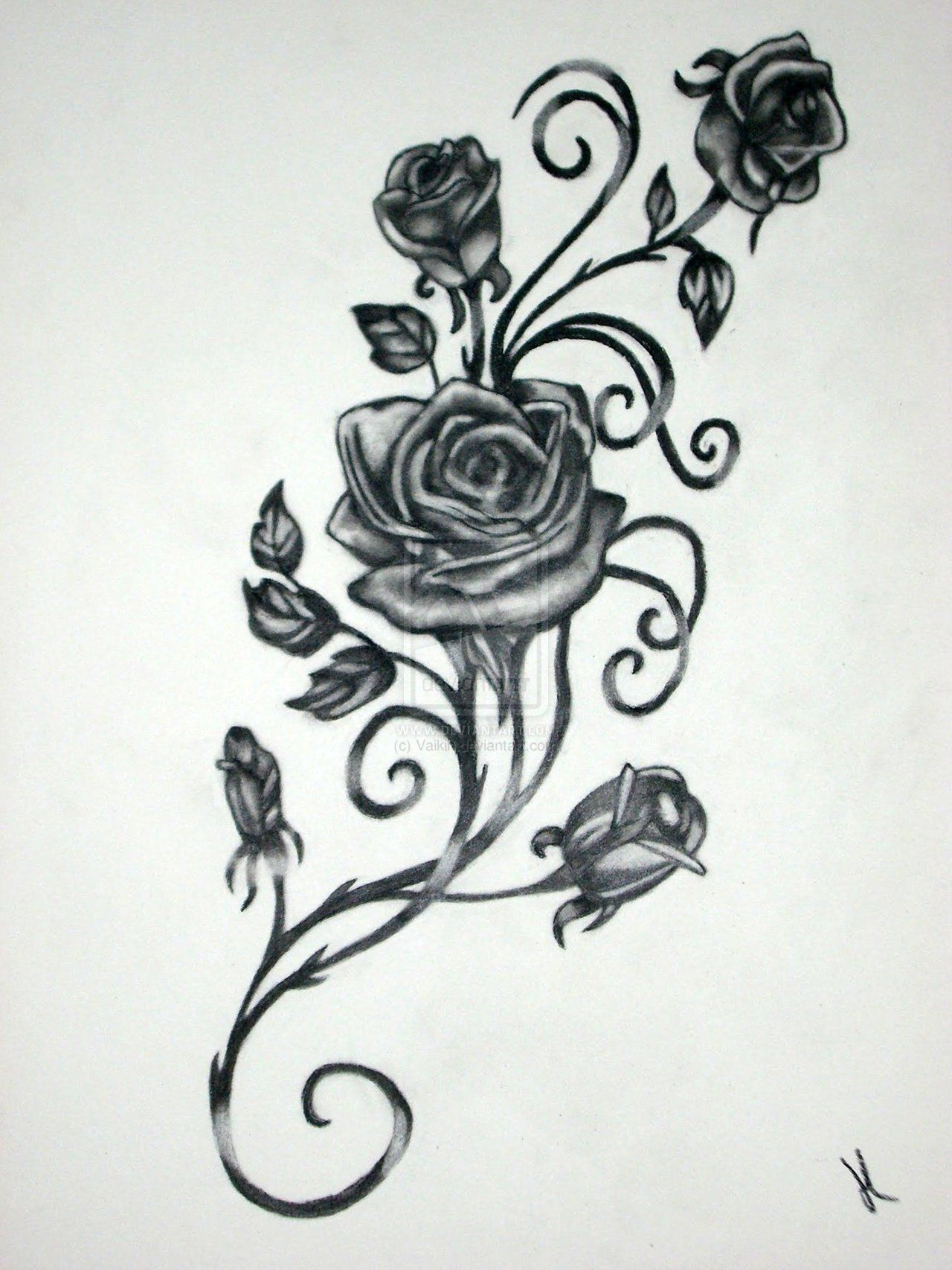 Roses with vines drawing rose vine drawing black rose vine tattoos