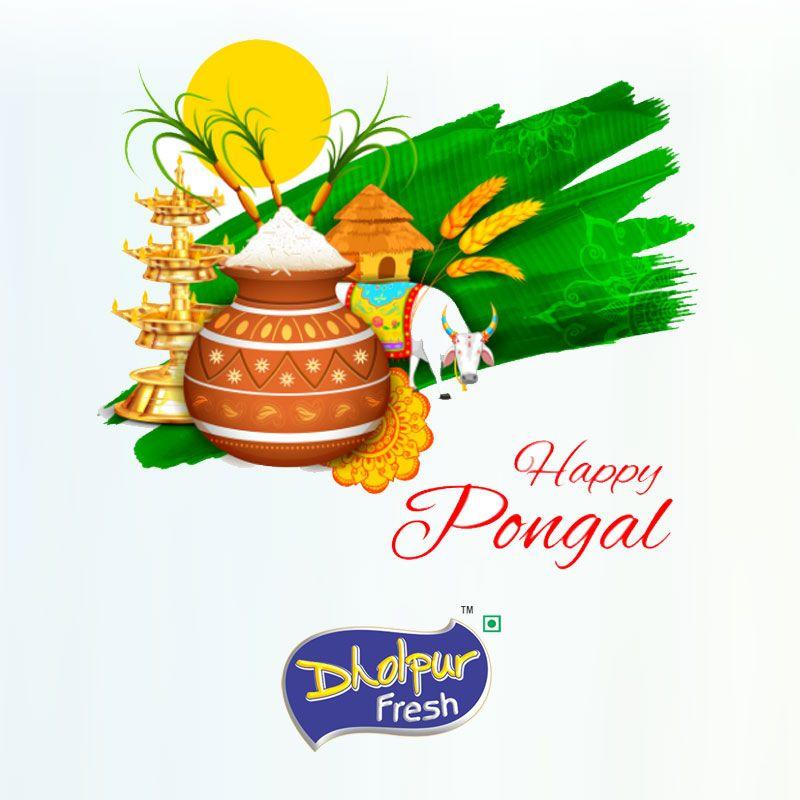 Happy Pongal Bholebabagroup Dholpurfresh Happy Pongal Holiday