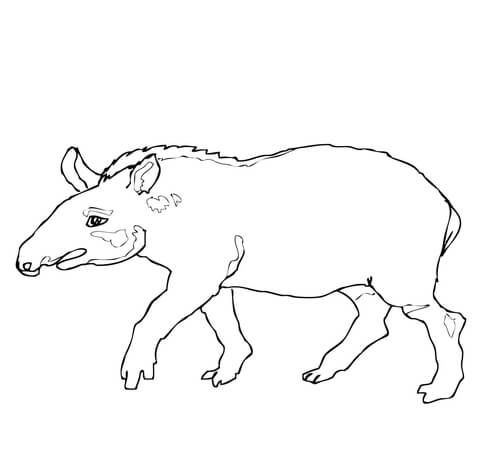 tapir coloring pages for kids - photo#17