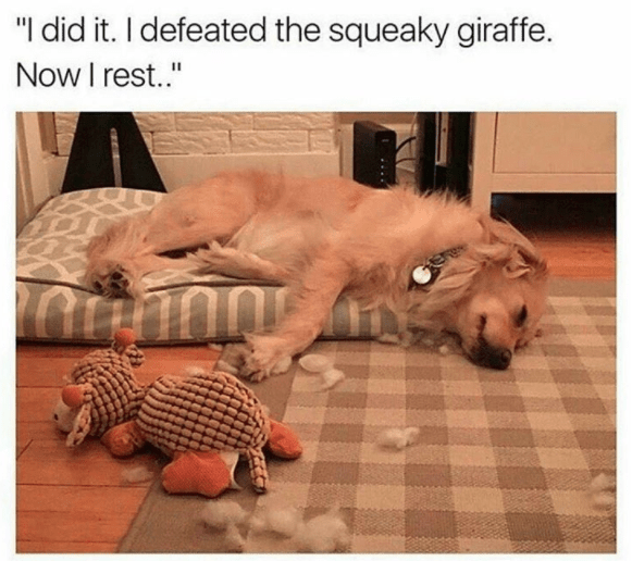 30 Animal Memes That Will Make You Laugh Until You Cry Animal Memes Funny Animal Memes Funny Animals