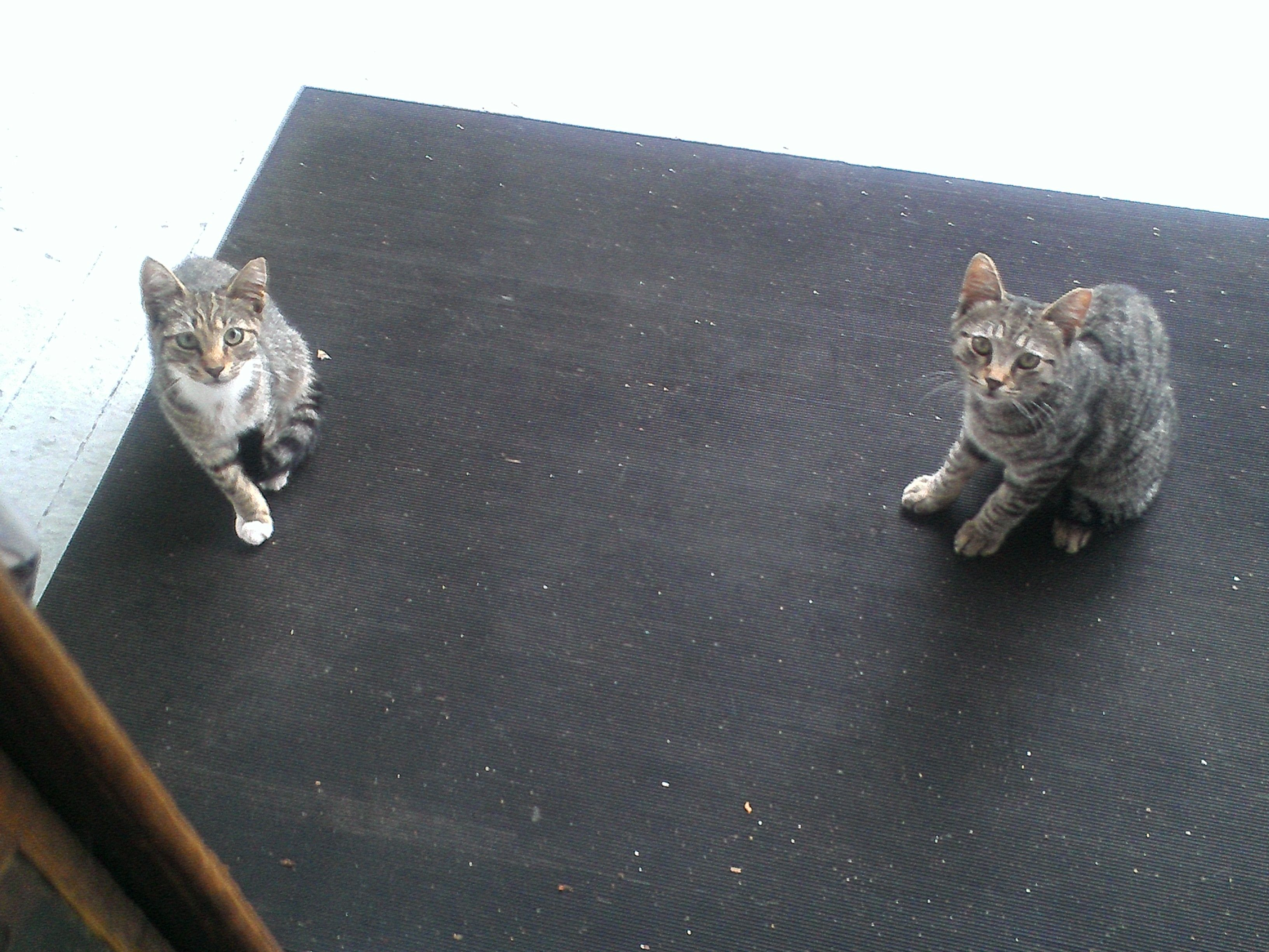 How Can I Not Feed Them When They Look At Me Like This Trying To Find A Home Or No Kill Shelter That Can Take Them I Al 5 Month Olds Being