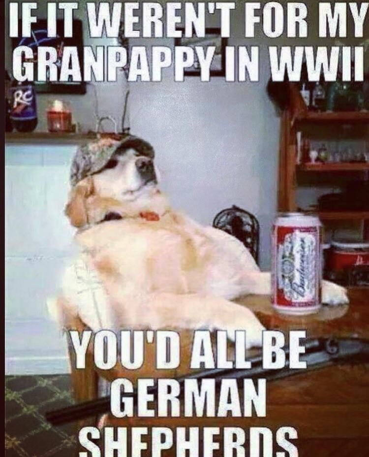 Memorial Day Weekend Vibes Funny Lol Memes Funnymemes Bestofreddit Funny Dogs Funny Meme Pictures Funny Pictures