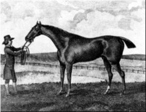 Waxy(1790)Pot8os- Maria By Herod. 4x5x5 To Godolphin Arabian, 5x5 To Flying Childers, Fox, & Crab. 15 Starts 9 Wins 3 Seconds 2 Thirds. Won Epsom Derby. One Of Many Sons Of Pot8os That Went On To Very Successful Stallion Careers. Waxy Sired 4 Epsom Derby Winners(Tied With 3 Others For Most All-Time), And 3 Epsom Oaks Winners. Died In 1818.