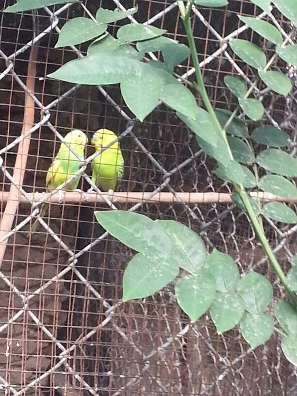 طيور الحب Plant Leaves Plants Heath Ledger Joker