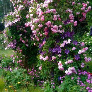Grand parc des chemins de la rose dou la fontaine en anjou jardins gardens pinterest - Jardin de la rose doue la fontaine ...