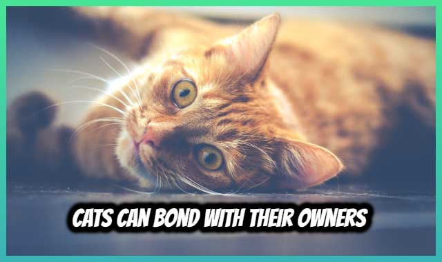 Cats Can Bond With Their Owners Bad Cats Cats Cat Breath