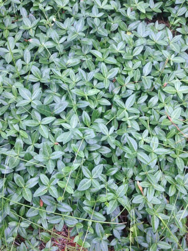 Best Ground Cover Plants For Sun: Free Plant Identification