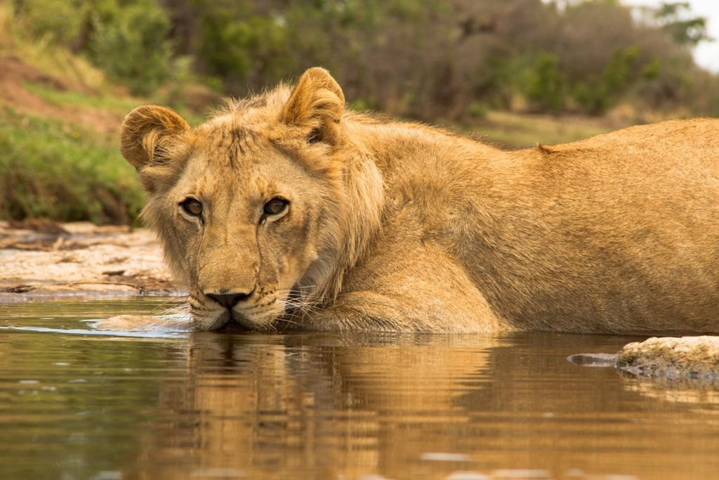 Pin by Dawn on animals | Wildlife photography, Africa