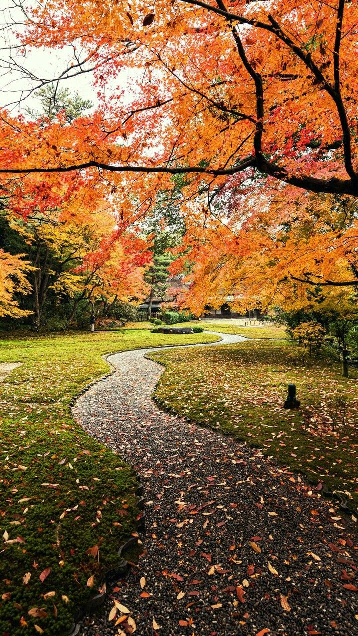 Pin by Lina Lababidi on Autumn Android wallpaper, Iphone