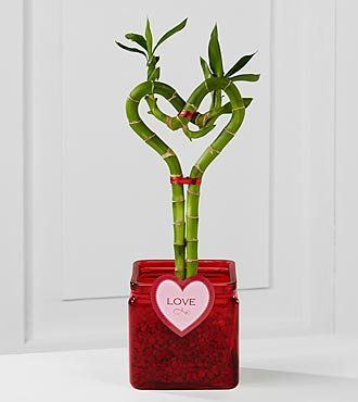 FTD Flowers Heart Valentines Bamboo-Single $ 0.00