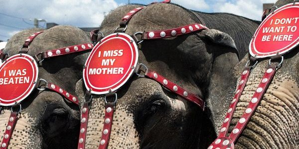 Take Action~Please Sign & Tell Kelly Miller Circus to End the Use of Animals in their Circus!