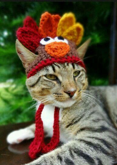 b7849eca4e Cat with turkey head dress