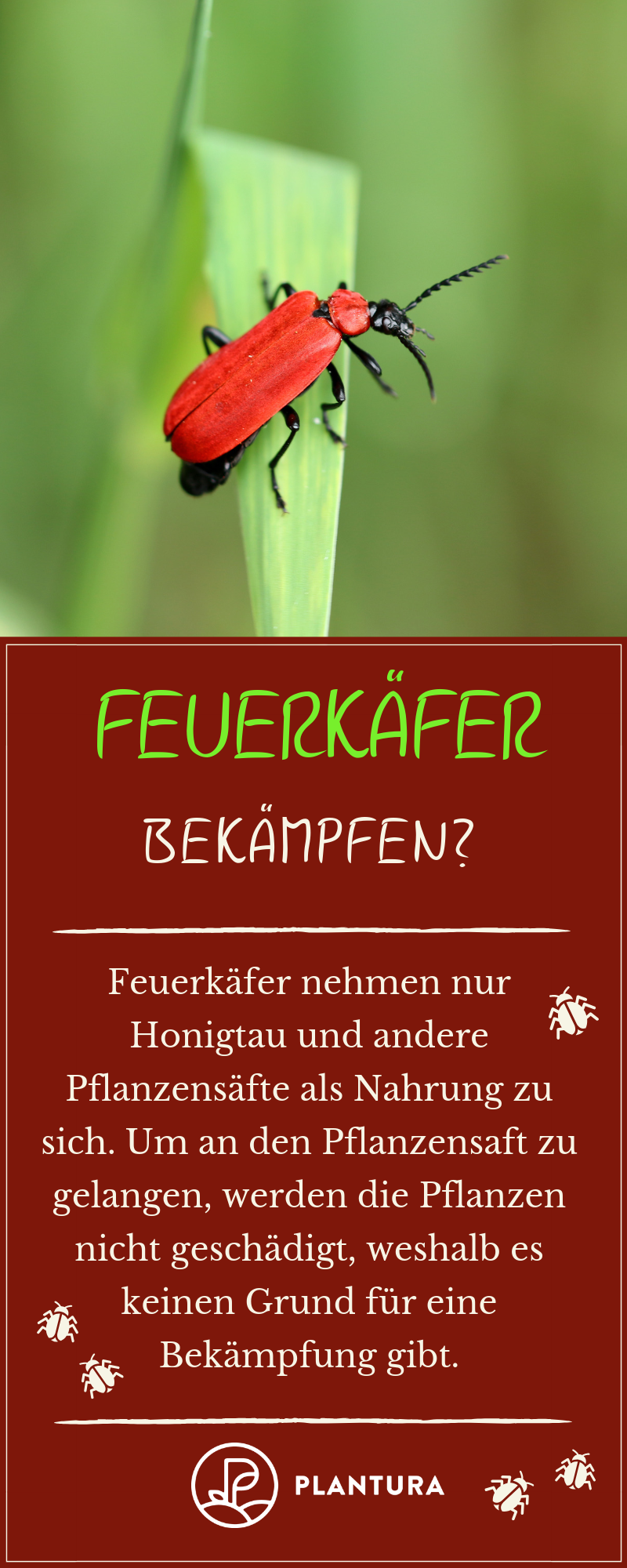 Feuerkafer Giftig Gefahrlich Plantura Pflanzen Gartentipps Pflanzenschutz