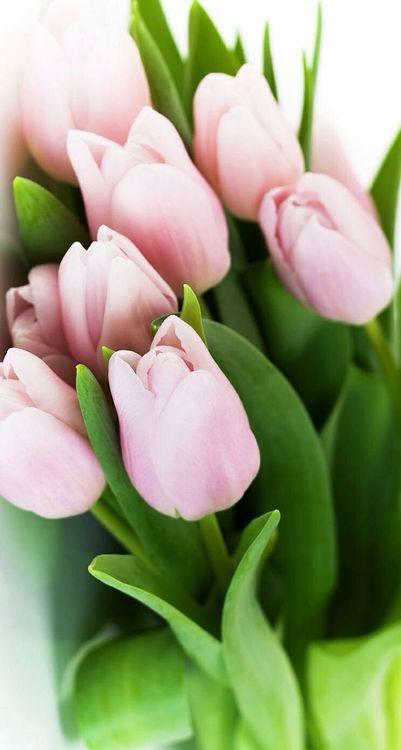 #spring Frühling #PlantenunBlomen #EuropaPassage #EuropaPassageHamburg #Blumen #Flowers #Tulpen