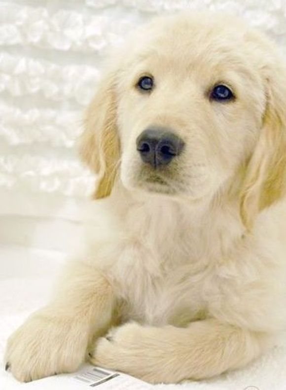 3 3 How Perfect Puppy Dog Eyes Cute Dogs Cute Puppies