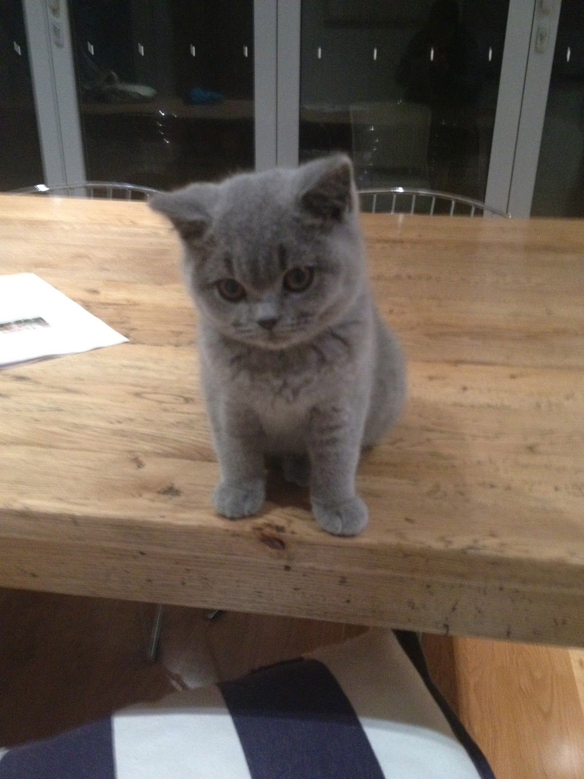 Look who is back....... Cute baby animals, Grey kitten