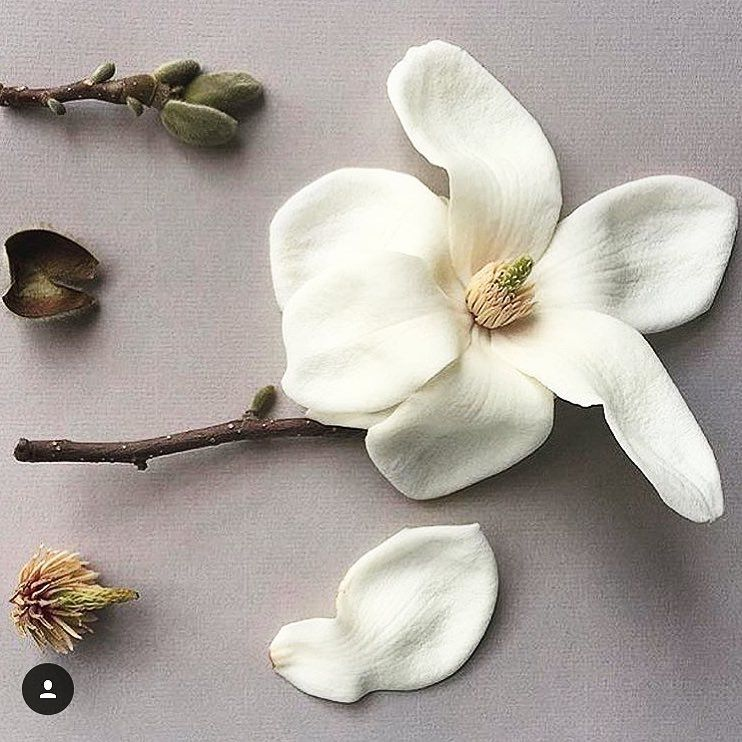 Martyn Thompson Studio On Instagram Anatomy Of A Bloom Rg Grandiflora Fragrance Via Robbiehoney Flower Structure Flower Anatomy Flower Petals