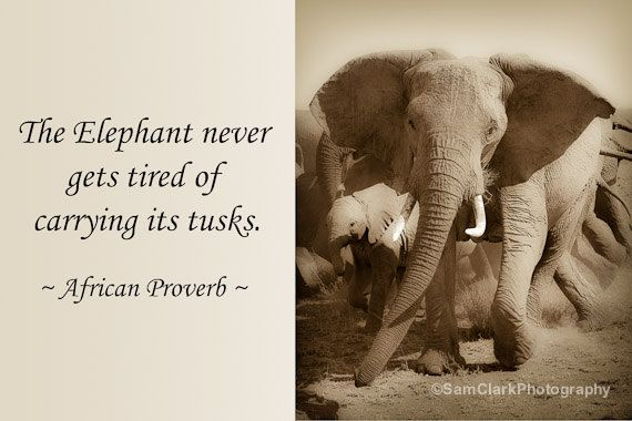 inspirational quotes elephant images google search