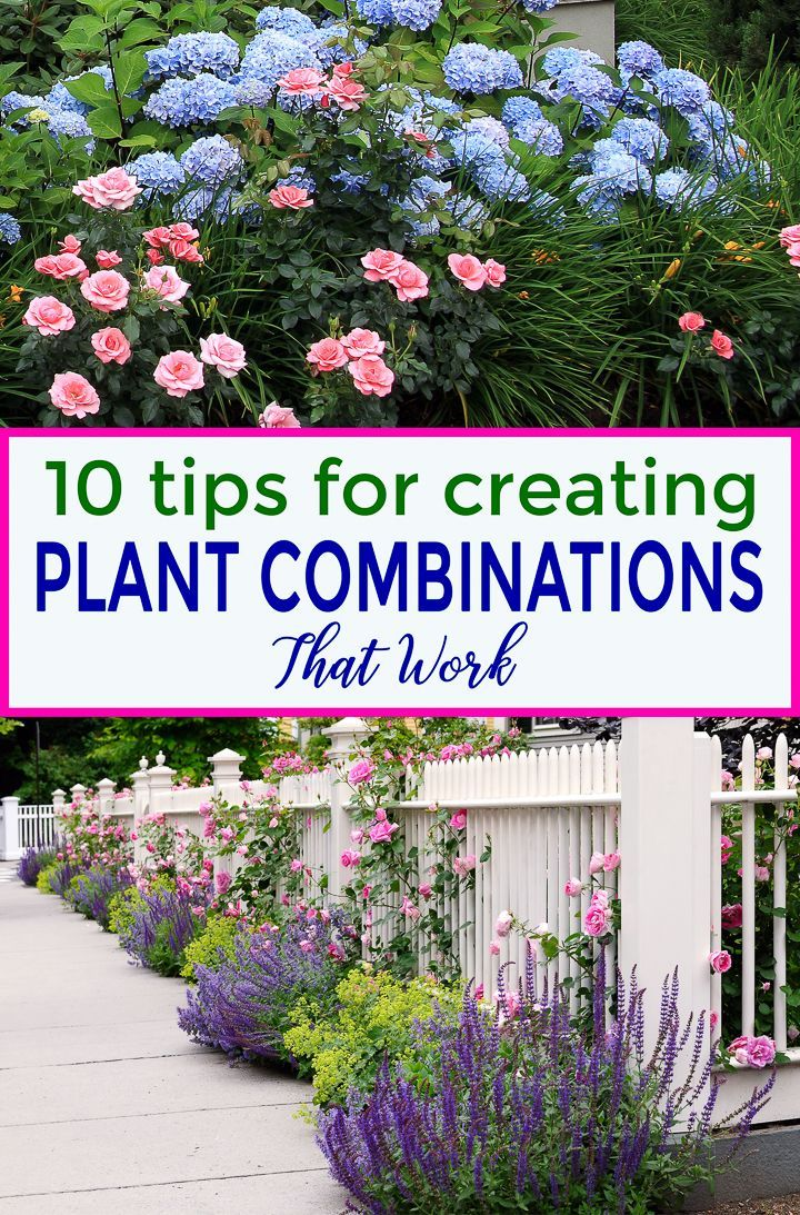 10 Tips For Creating Plant Combinations That Work - Gardening @ From House To Home #flowerbeds