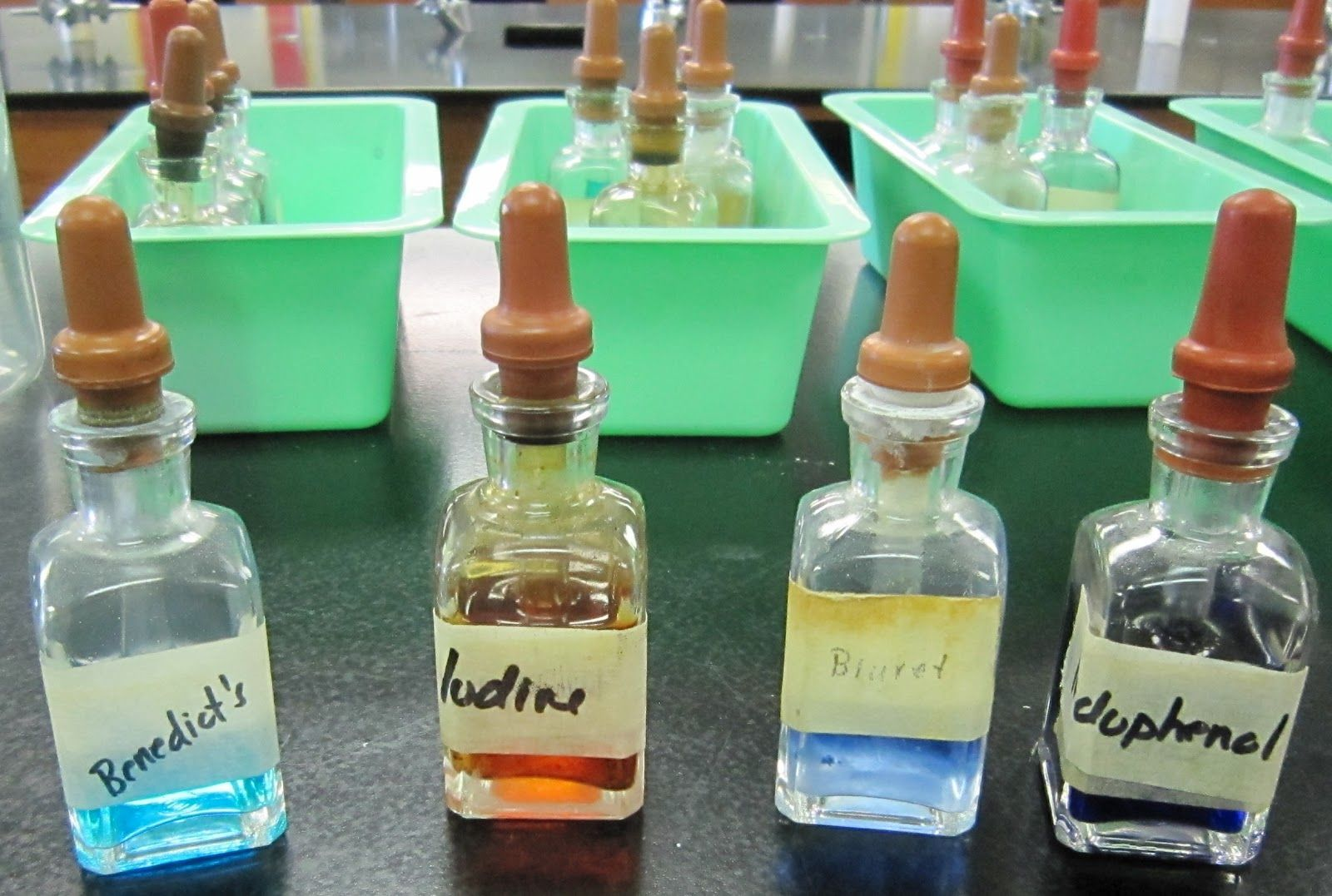 Science Stuff Great Biology Lab Testing Foods For Organic Compounds