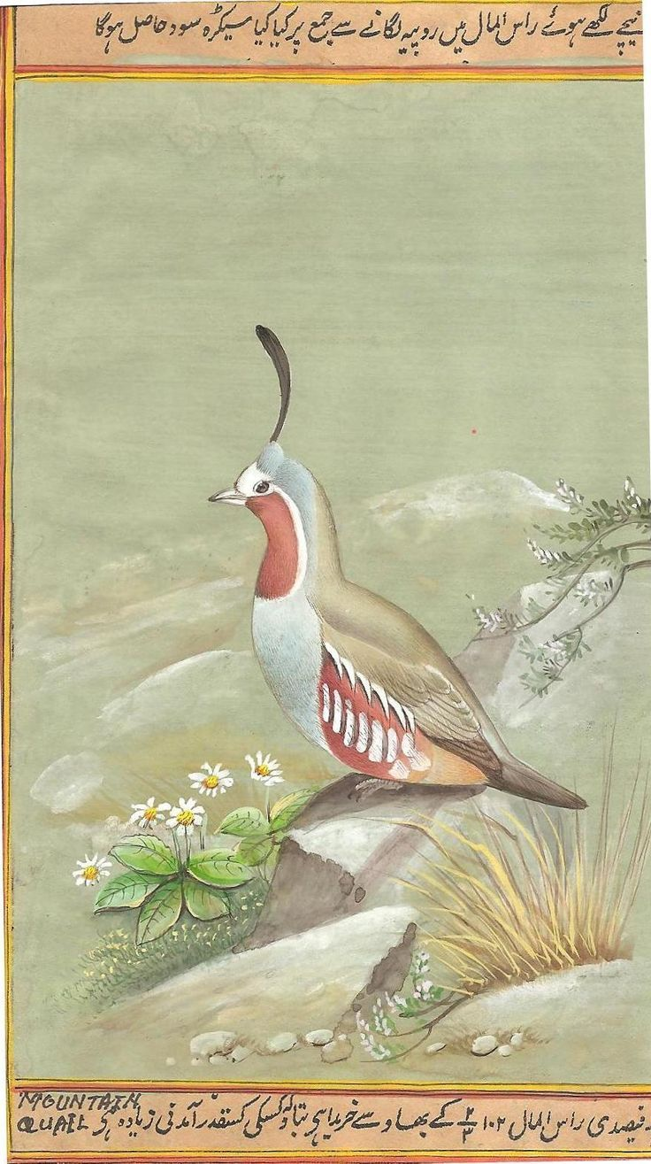 Mountain Quail Bird Painting Rare Handmade Indian Miniature Wild Life Nature Art: