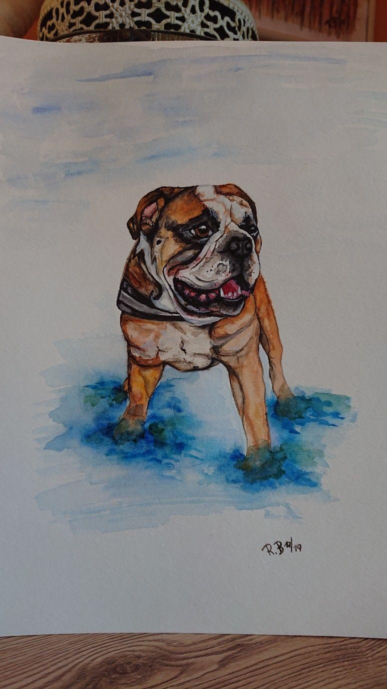 Aquarell Englisch Bulldog Aquarell Malen Und Basteln