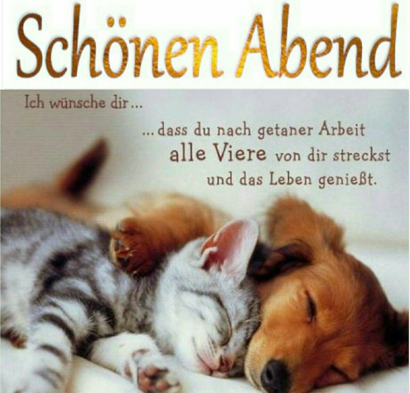 Pin Von Author Velda Brotherton Auf Cute Kittens Gute Nacht Katze Bilder Fur Whatsapp Schonen Abend Bilder