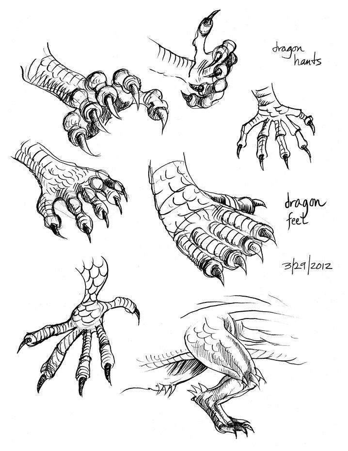 Dragon Claws Feet Text How To Draw Manga Anime Dragon Claw Dragon Drawing Dragon Sketch