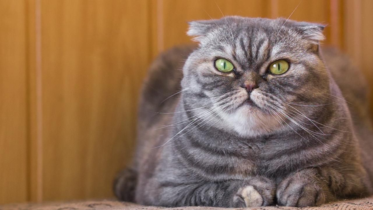 What Is the Average Lifespan of a Cat? Cat lovers, Cats
