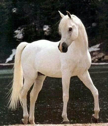Dream horse. Right here.