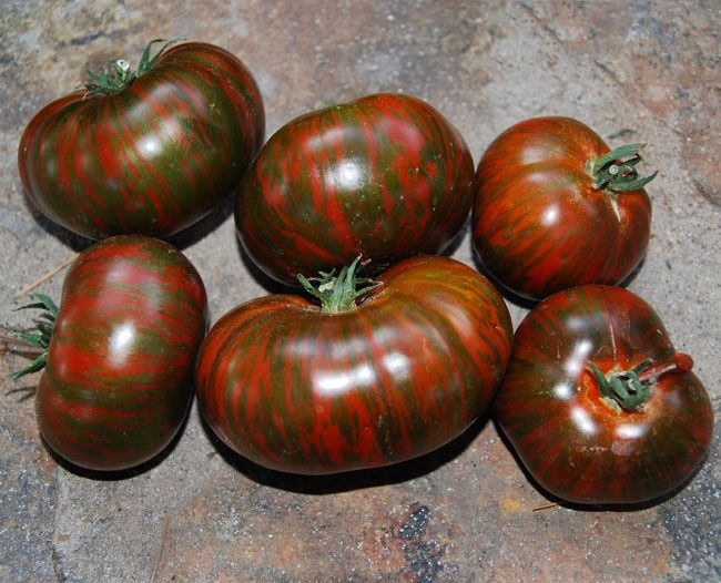 Heirloom Seeds Rare collection Tomato Seeds Feather Firebird Striped plum