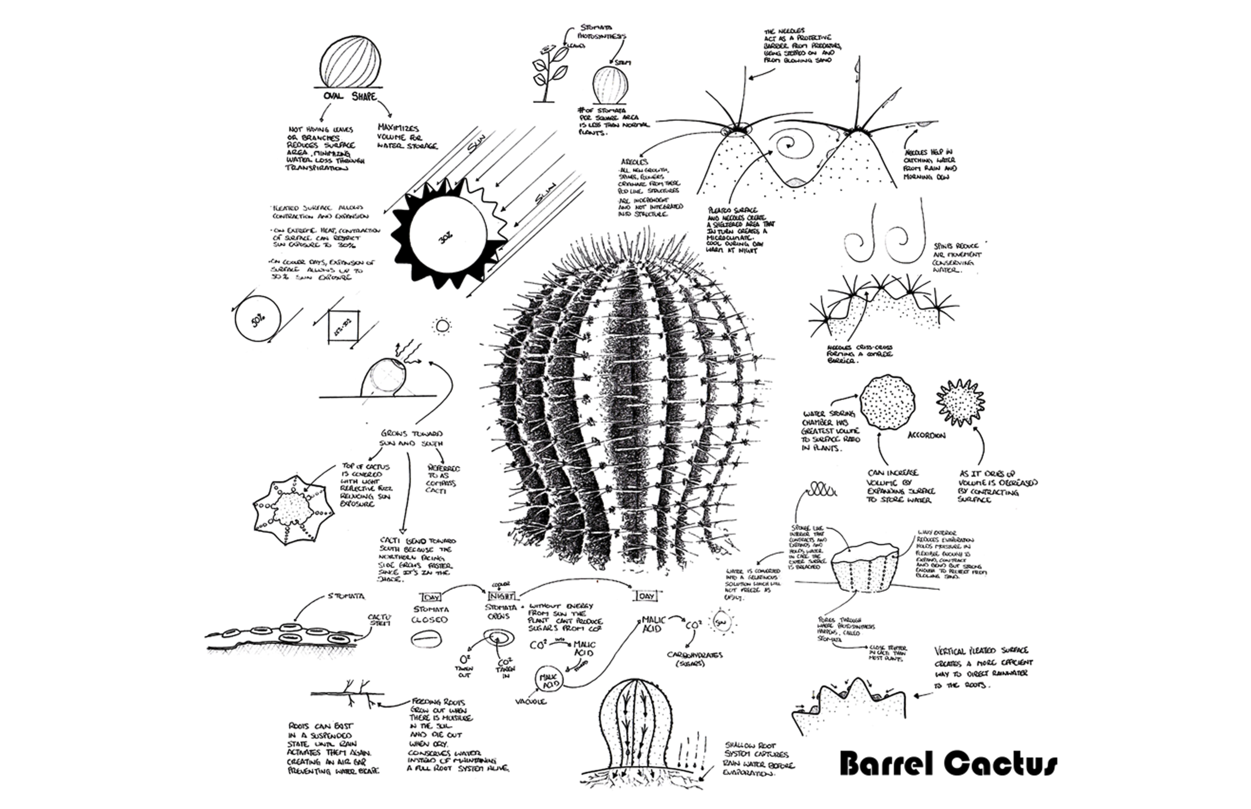 Learning From A Barrel Cactus