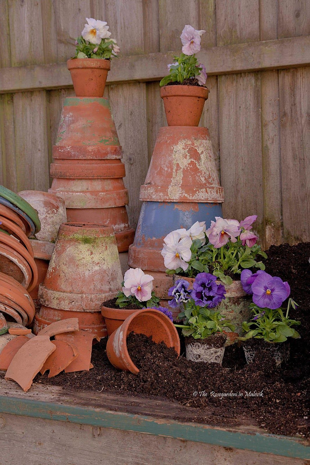 old pots and pansys The ROSE GARDEN in Malevik | Garden Decor ...