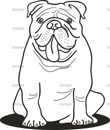 Photo Bulldog For Coloring Book Image 2281368 Dog Coloring Page Bulldog Drawing Bulldog Art