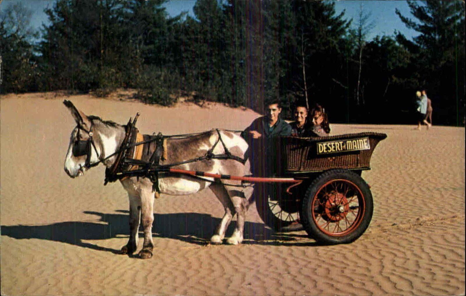 Freeport Me Desert of Maine Pedro The Burro Pulling Cart Old ...