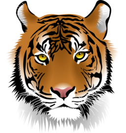 Pin By Peggy Petersen On Tigers Tiger Face Cartoon Tiger Tiger Illustration