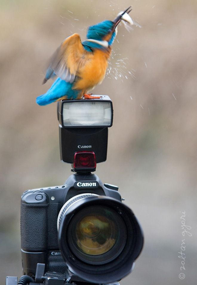 Imagine if that was your only camera!