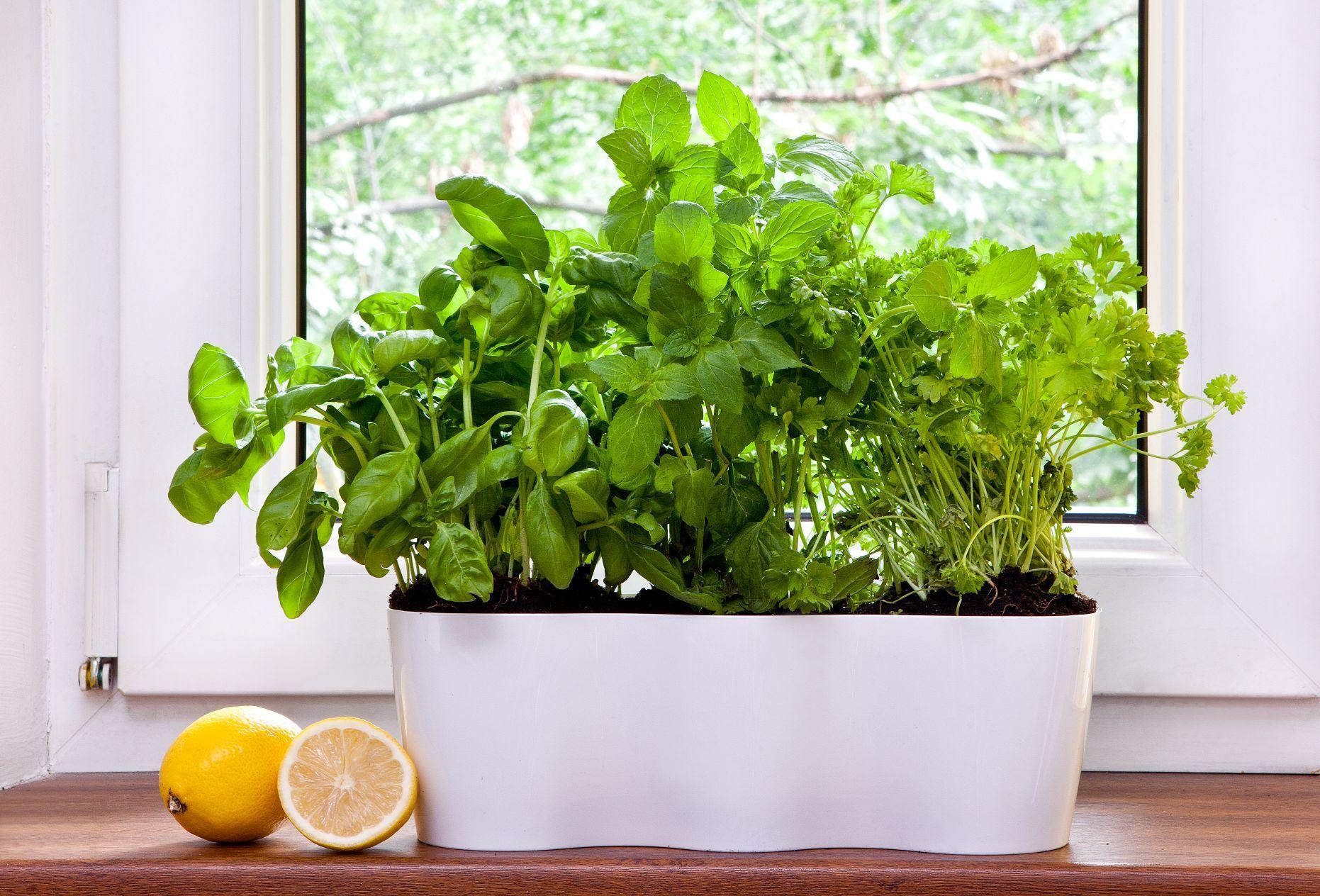 Triple maceta para tus plantas arom ticas en la cocina - Plantas aromaticas en la cocina ...