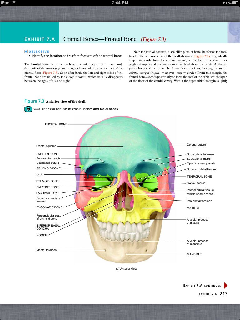 Principles of Anatomy and Physiology, Chapter 7, The Skeletal ...
