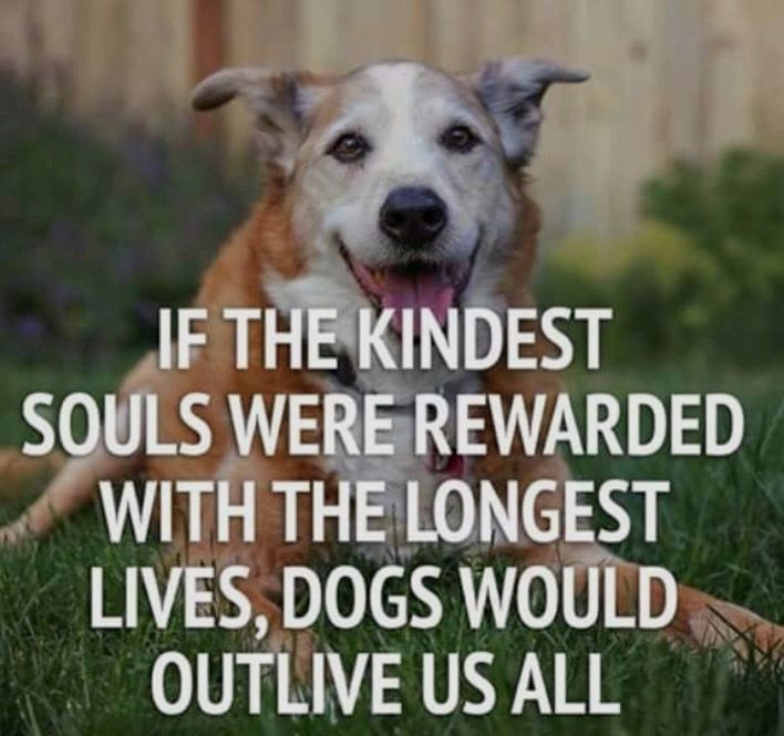 Pin By Susan Kapor On Dog Assorted Dog Quotes Dog Love Dogs