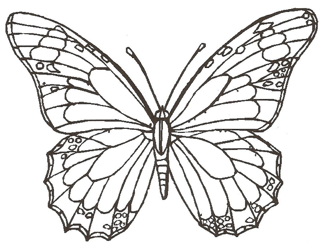 Native American Wisdom Animal Totems Insect Coloring Pages Butterfly Printable Butterfly Coloring Page