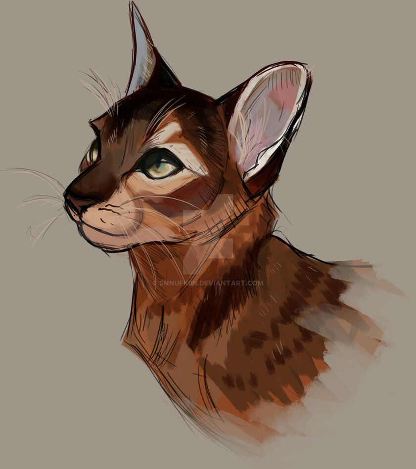 Pin By Alexis Rivera On Drawing Warrior Cats Art Warrior Cat