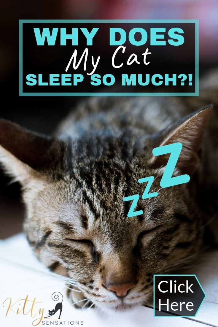 Why Do Cats Sleep So Much? 7 Reasons You Need to Know